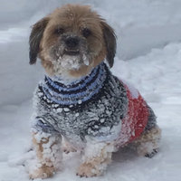 Dog clothes for winter
