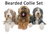 Miau & Woof Bearded Collie