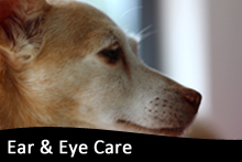 Ear & Eye Care