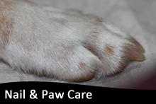 Nail & Paw Care